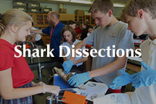 2019 Shark Dissection